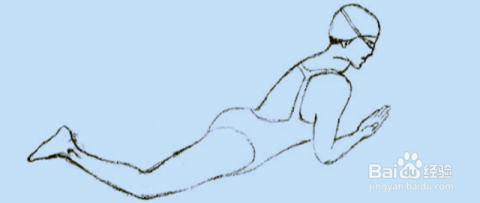 【蛙泳】動作要領圖解及換氣技巧圖片