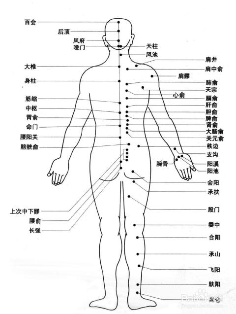 人体祼体_要大体认识人体部分穴位所在,依穴位贴膏药,效果才会更好.