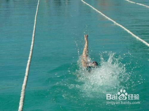 仰泳的動作要領圖片
