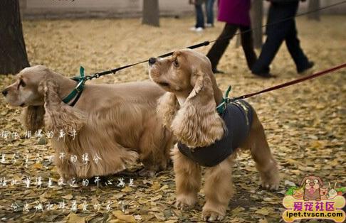 欧美性爱狗_怎样让狗狗静心的好方法