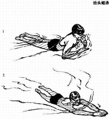 怎樣進行抬頭蛙泳訓練圖片