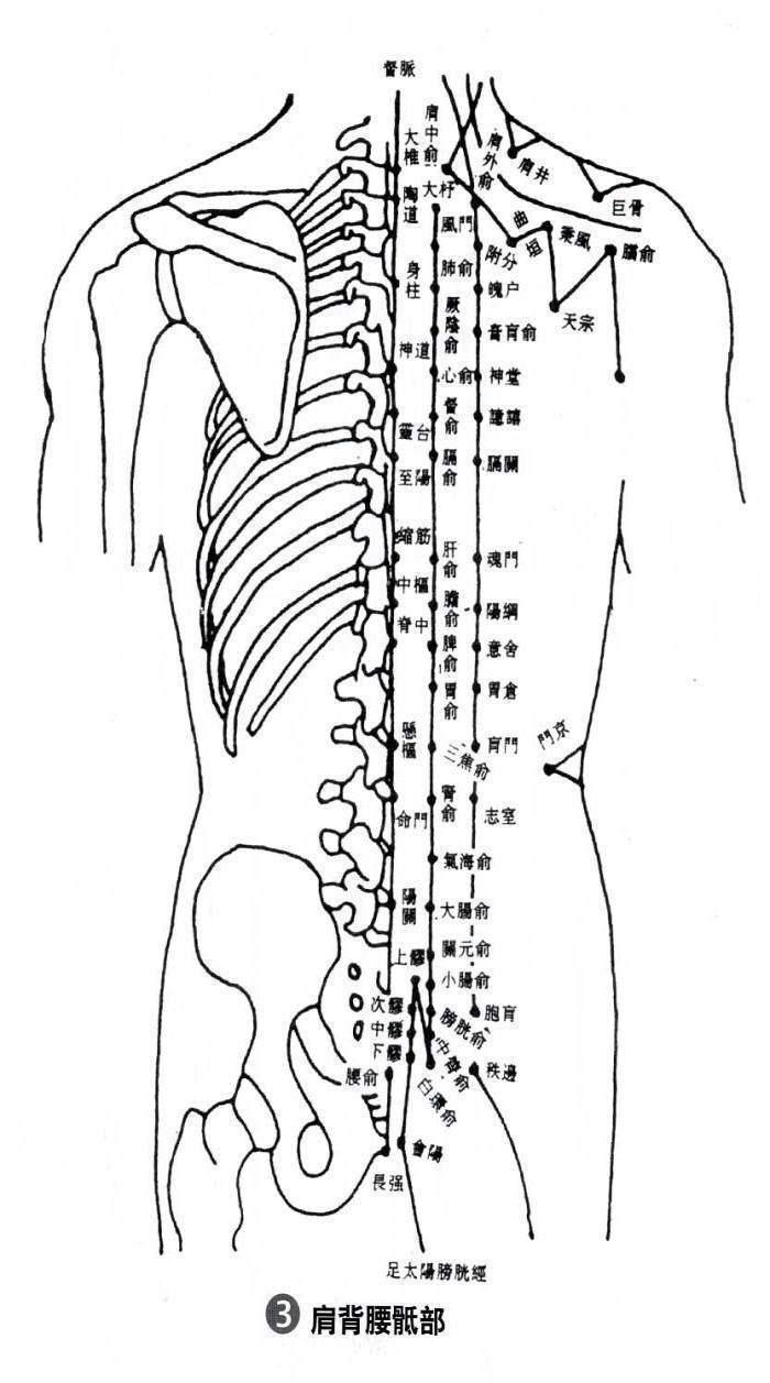 背部身体结构_【转】人体骨骼结构图_遵守人体使用手册,实践人体复原工程