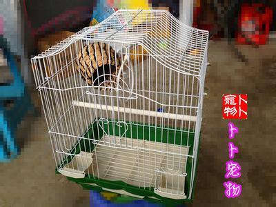鹦鹉繁殖箱_虎皮鹦鹉如何安装繁殖箱