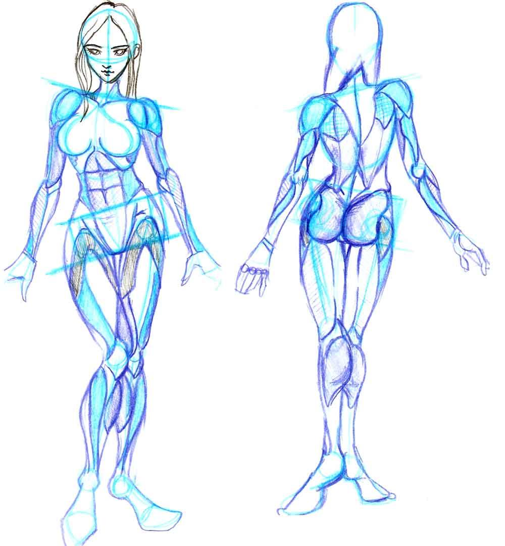 动漫人体结构_求动漫人物姿势,动漫人体结构教程或者图片.
