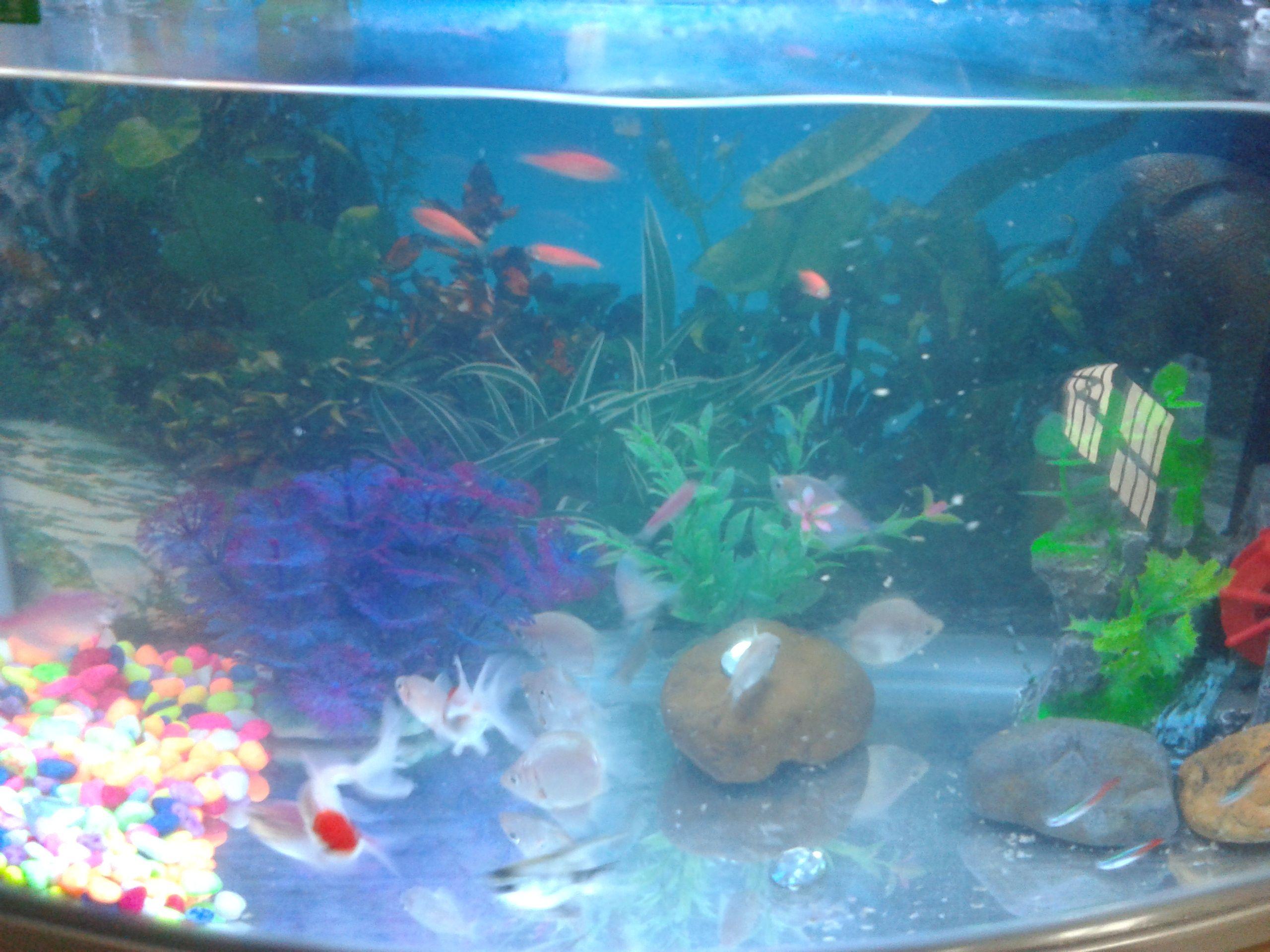 鱼缸假山造景图片_鱼缸造景高手进。_百度知道