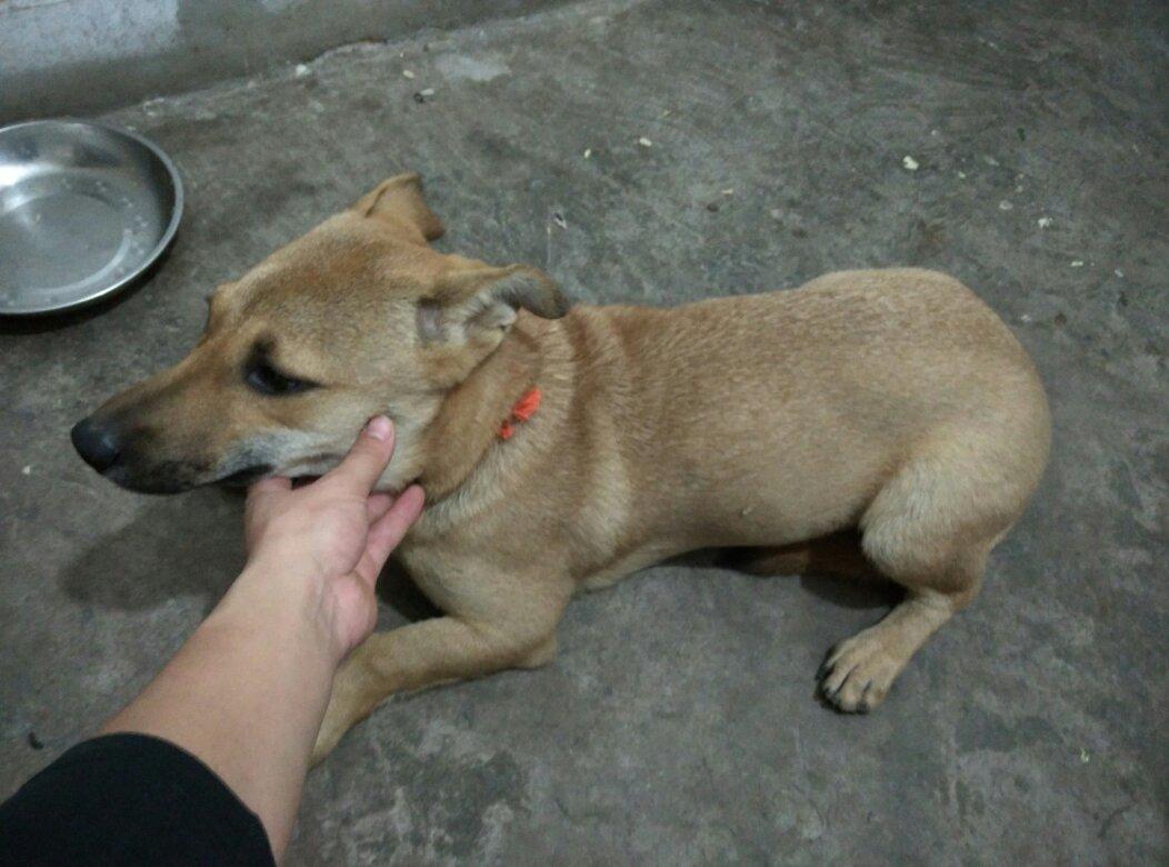 狗老公好粗好烫_求告知这是什么狗,腿短而且很粗,眉毛是黄色的点,腿也