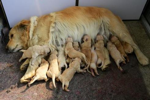 公狗操女人公媳乱伦的故事_几下就会做一些动作狗很大一部分动作都是遗传下来的|||那不是乱伦吗?
