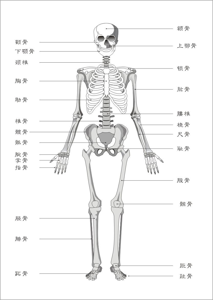 男性人体曰历囹�a_引起男性耻骨痛的原因
