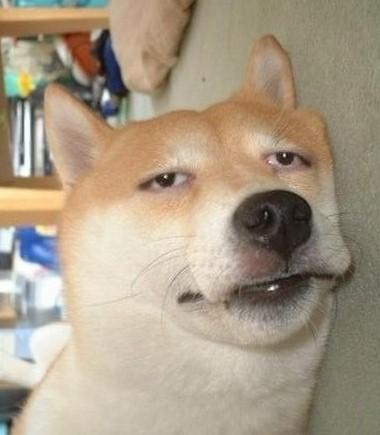 狗图片_求这只狗的所有图片_百度知道