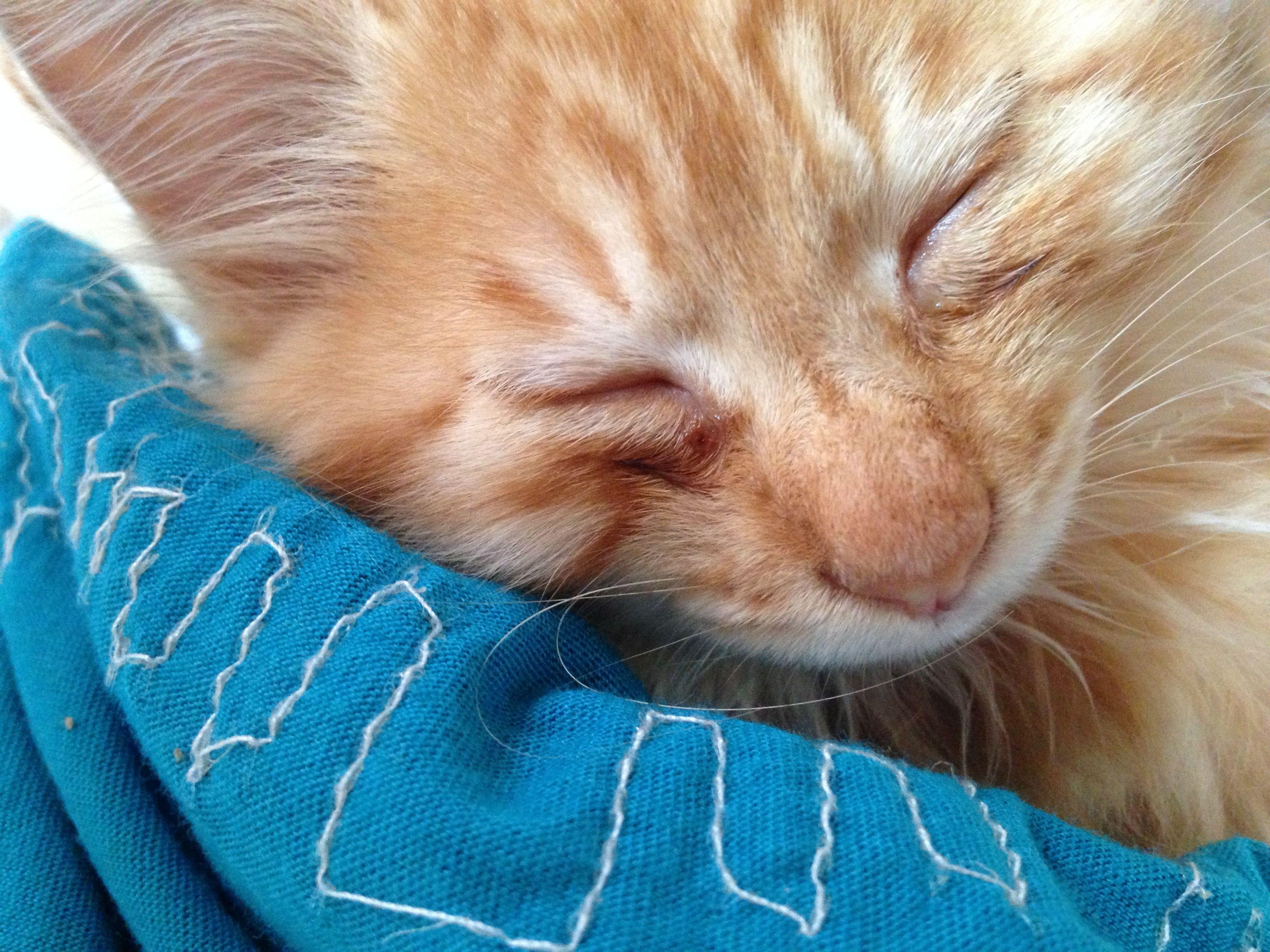 猫得螨虫的症状_猫咪这是得了猫癣么,还有他的眼睛是怎么回事啊。。。_百度知道