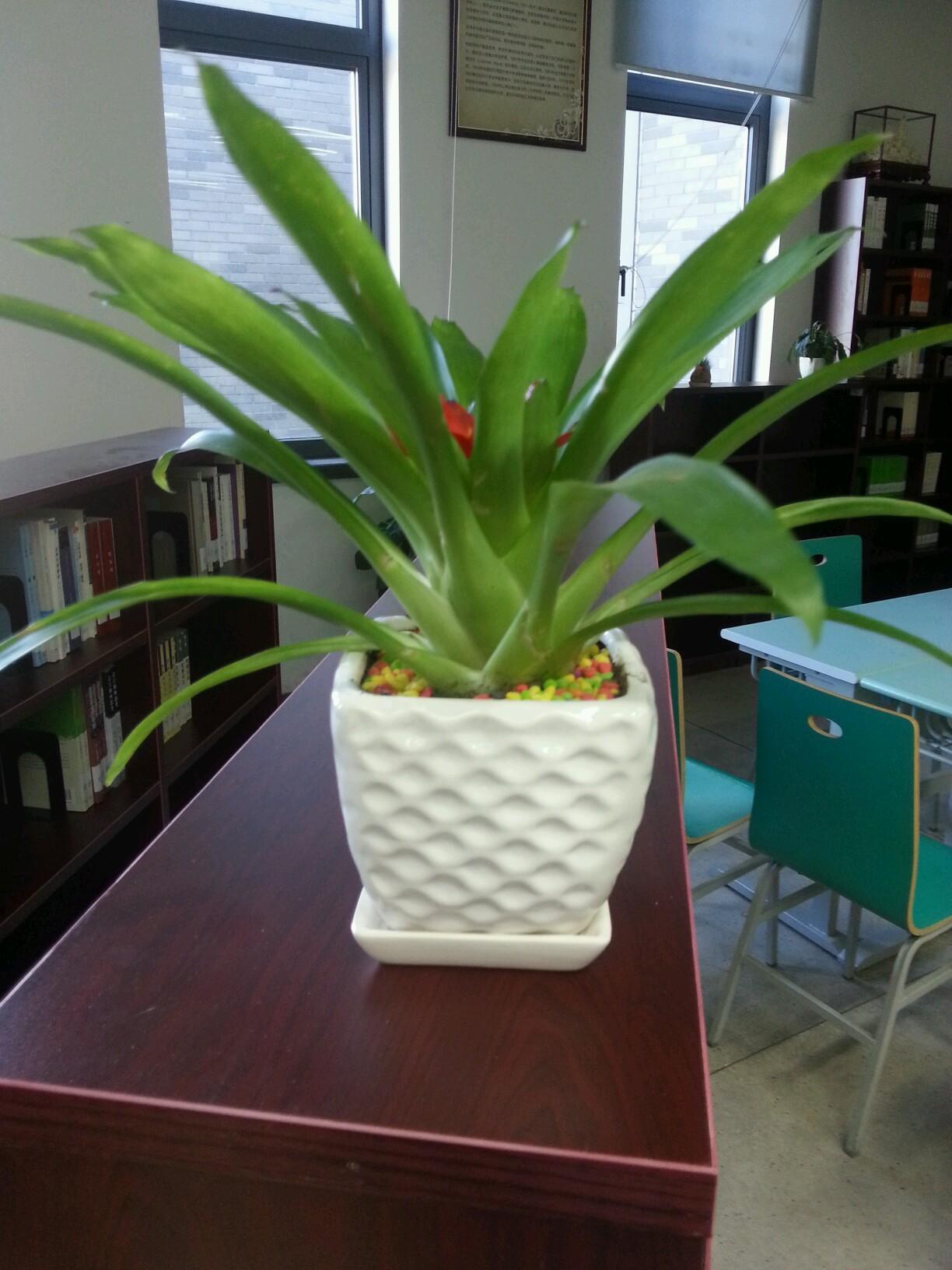 常见的家养花种类_常见盆景图片及名称-300种常见盆栽植物名称_适合放客厅的大盆绿 ...