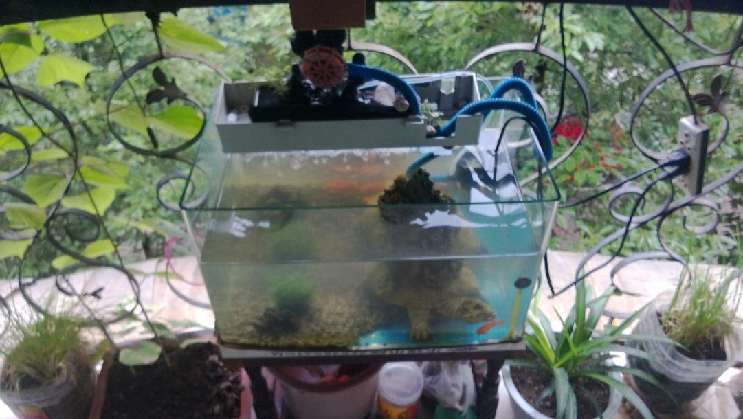 有上濾的,魚缸還是不干凈?圖片