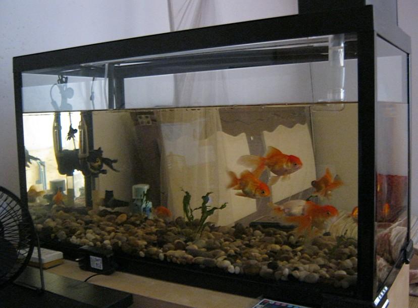 幾天要換水圖片_魚缸養錦鯉幾天要換水圖片下載; 缸養錦鯉過濾系統圖圖片