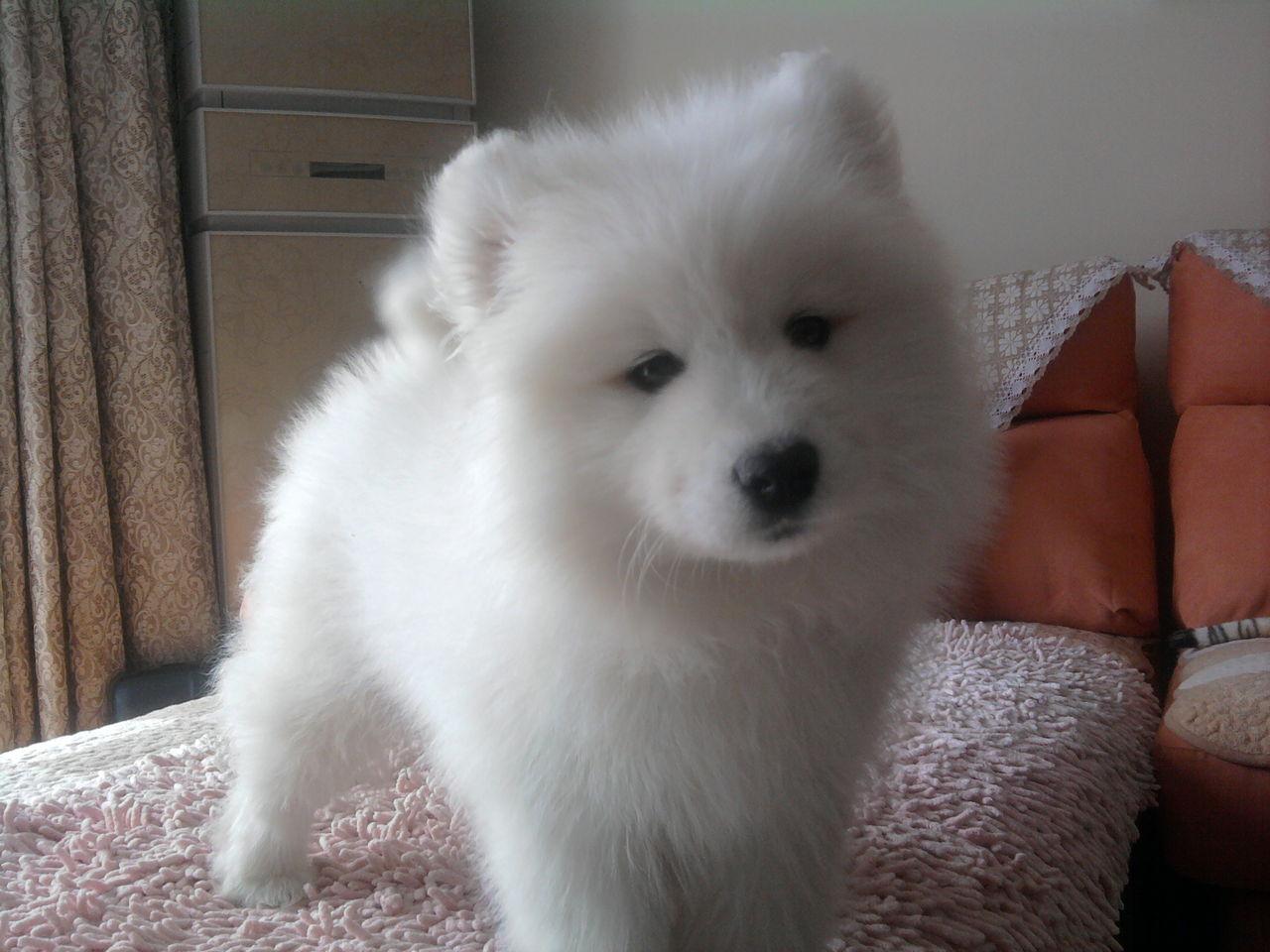 描写小狗的外形_怎么描写小狗的外貌-小狗的样子和特点描写,描写小狗外貌的句子 ...