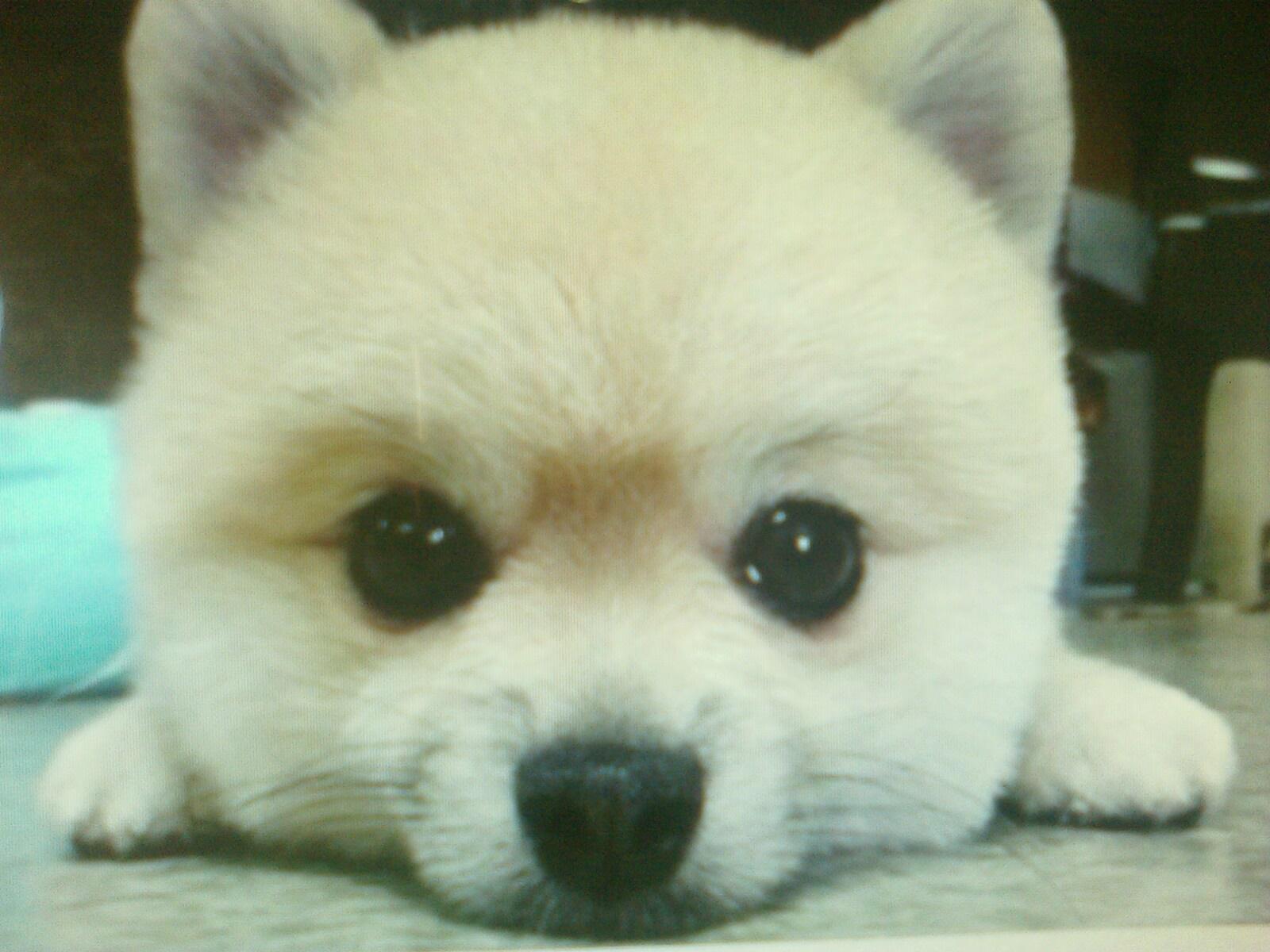 给个网址人与动物的_壁纸 动物 狗 狗狗 1600_1200