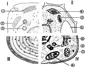 细胞平面图,显示所有细胞器_如图是四类细胞的结构模式图,请据图回答:(1)从结构上看 ...