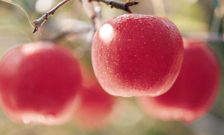 胃不好吃什么水果7种养胃水果