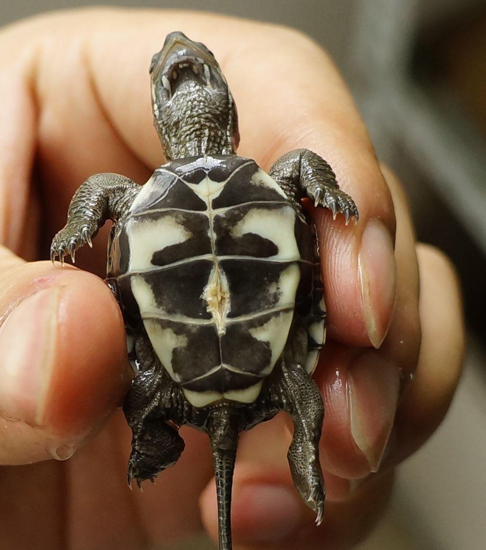 小乌龟冬眠了怎么办_乌龟肚子裂开了怎么办_百度知道