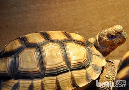 怎样让乌龟冬眠_巴西龟怎么冬眠?_百度知道