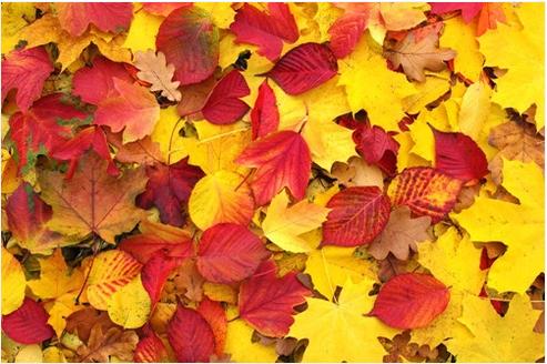 秋天的玉米怎么描写_秋天的作文怎么写?_百度知道