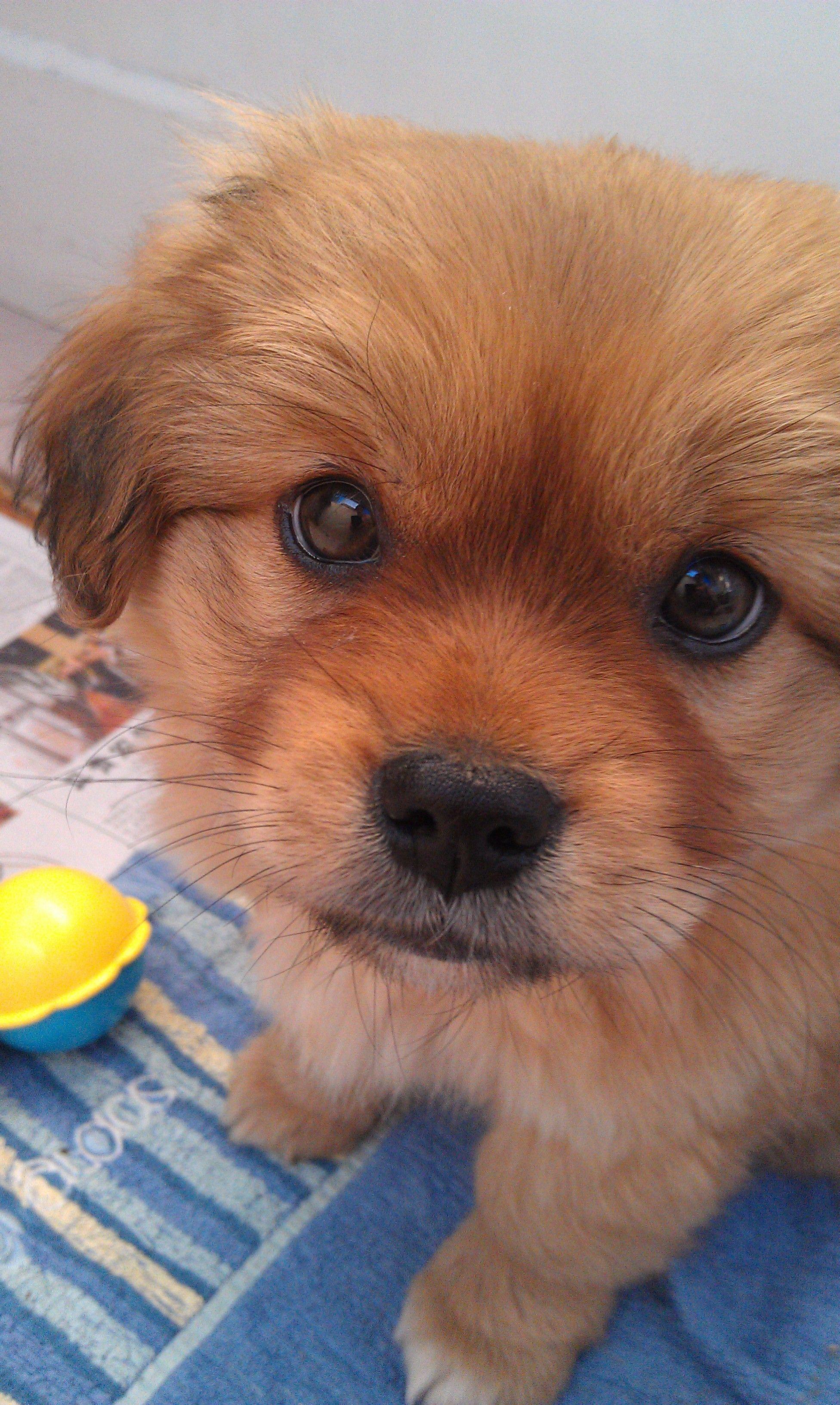 宠物狗图片和名字_狗狗大全及品种-狗狗图片,狗狗品种及价格,狗狗名字,中国狗狗大全