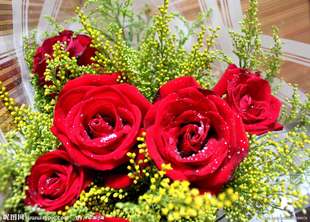 易画玫瑰花朵的图片_玫瑰花的图片_百度知道