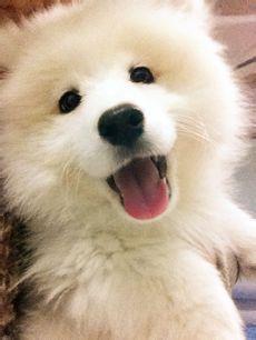宠物狗图片和名字_求各种可爱狗狗图片加狗狗名称和品种_百度知道