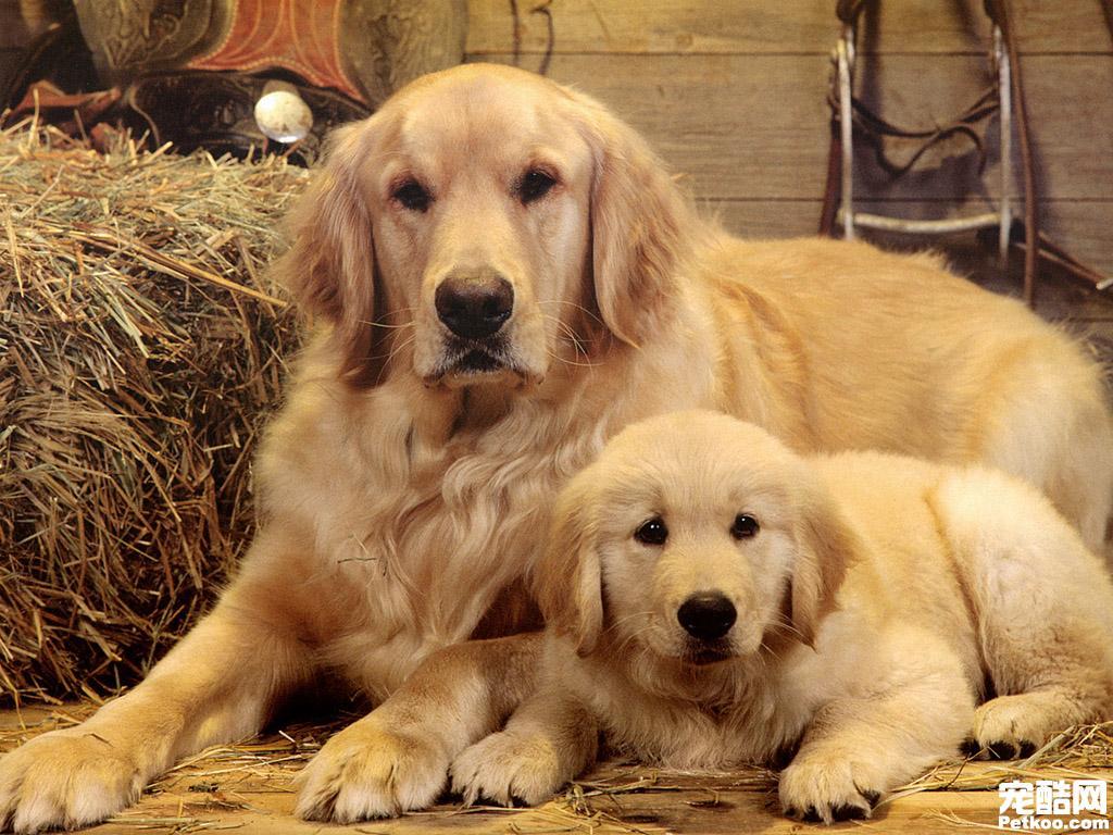 给狗带牛的名字_有谁告诉我这是什么品种的狗狗,谢谢啦!_百度知道