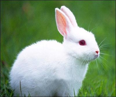 长尾巴的兔子_兔子的样子是什么_百度知道