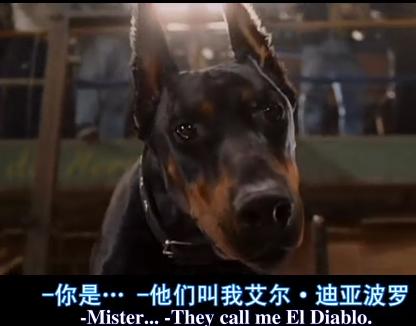 欧美shetupian_比佛利拜金狗 里面的狗狗品种