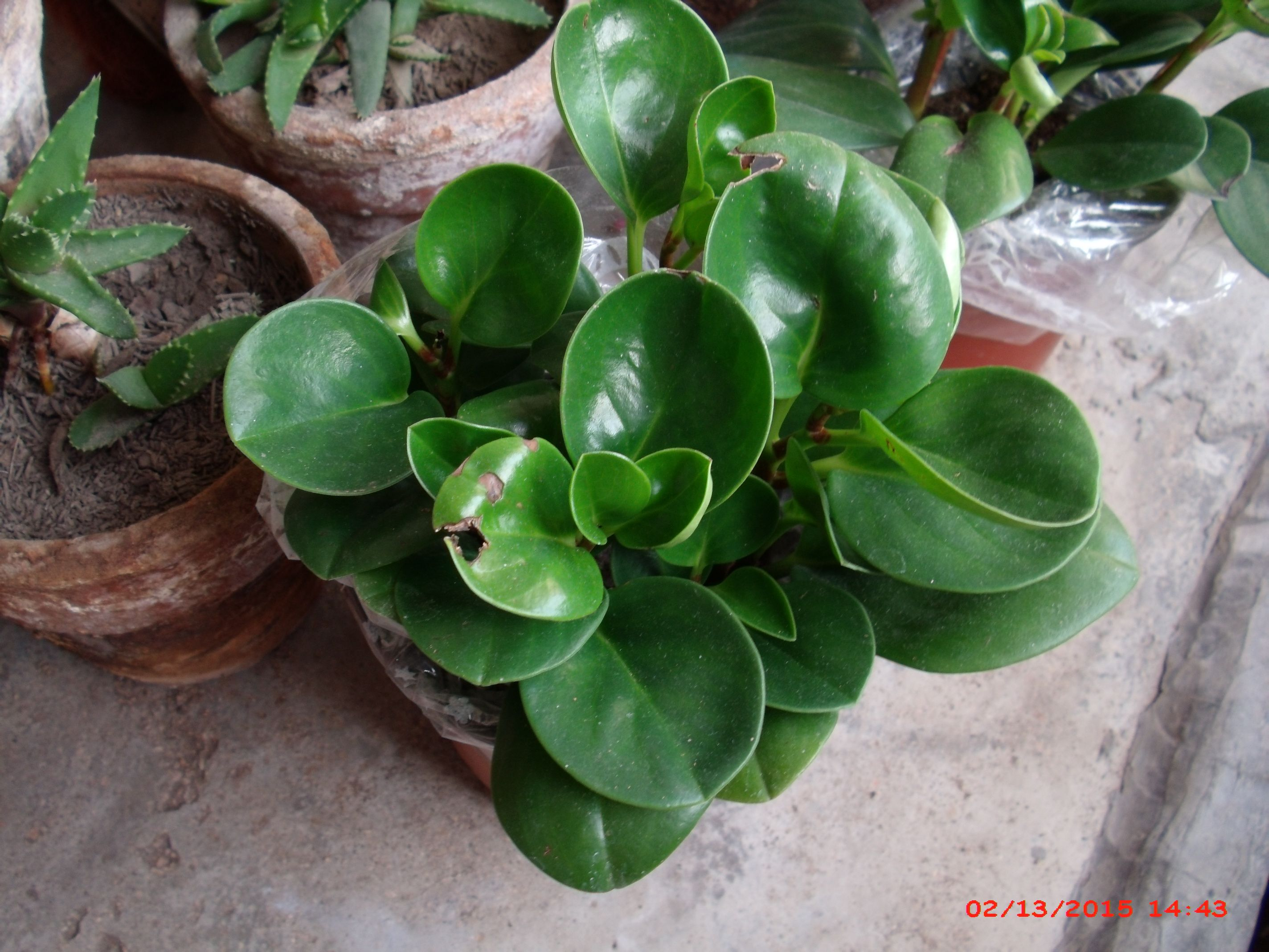 常见的家养花种类_各种盆栽的图片及名称-室内树木图片及名称/室内植物300种图片 ...