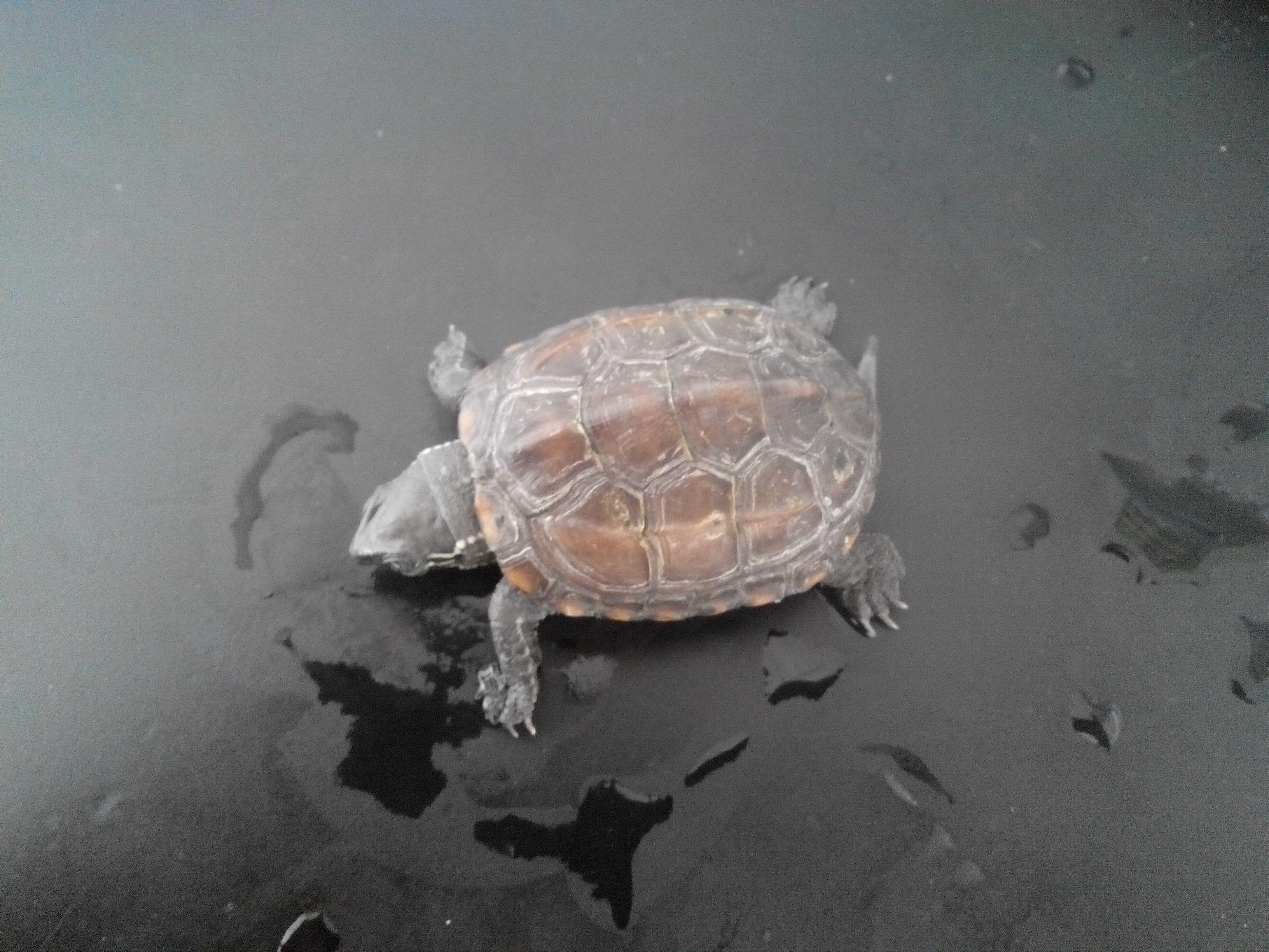 小乌龟浮在水面_小乌龟生病怎么治?_百度知道