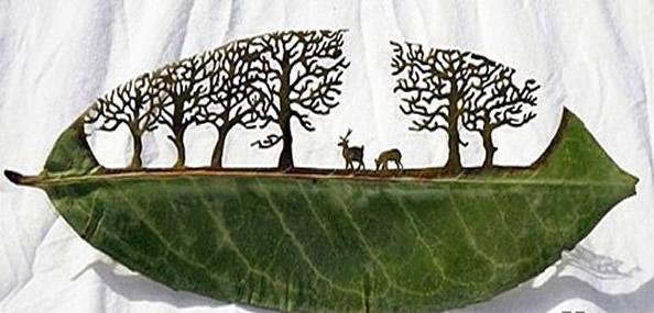 如何用树叶作画_如何在树叶上镂空作画 需要什么步骤_百度知道