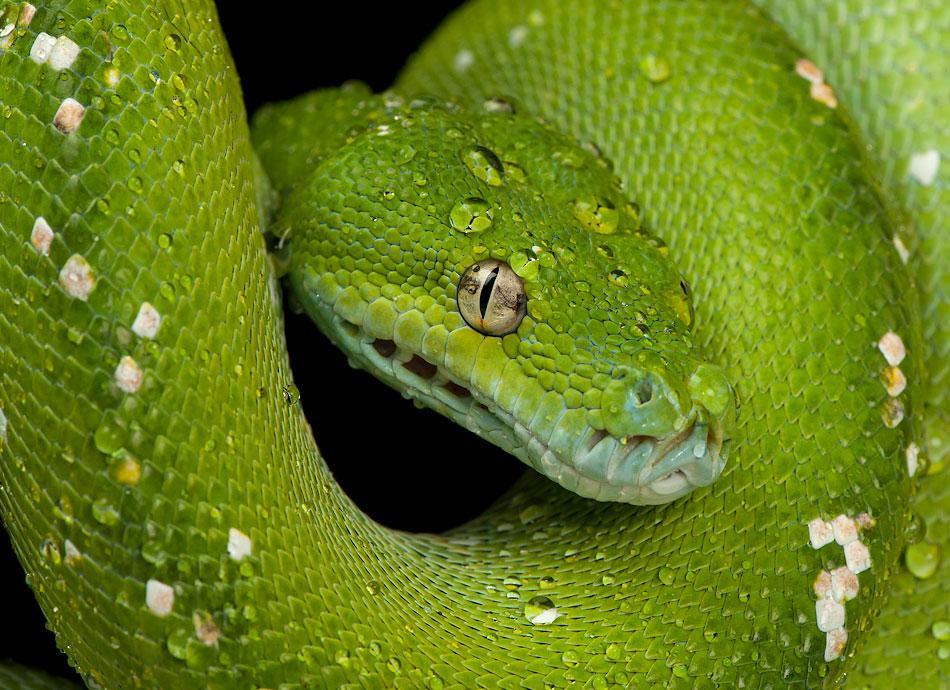 做梦蛇是什么意思_晚上老是做梦,做梦梦到蛇,是什么原因?