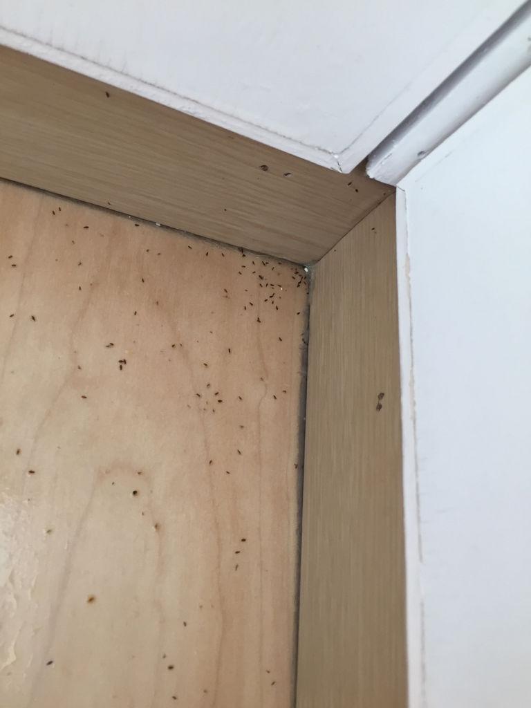 木柜長很多小小的蟲子…求助怎么能消滅干凈這些小蟲子圖片