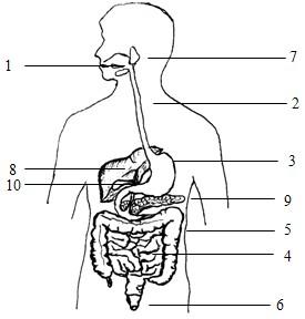 人体消化系统简图_求老师解答:下图是消化系统的示意_百度知道