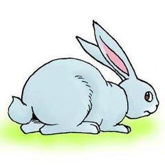 长尾巴的兔子_小兔子的尾巴像什么_百度知道