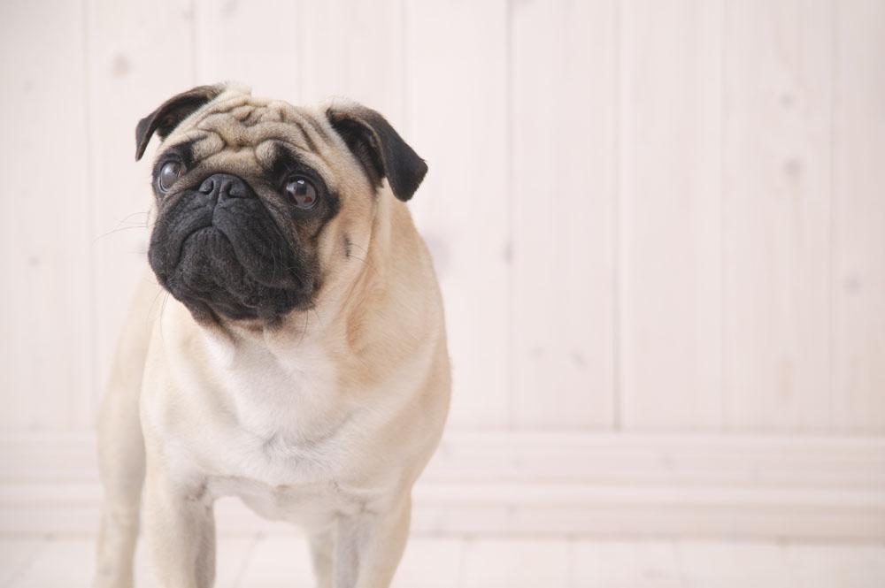 描写小狗的外形_描写狗外形的片段_百度知道