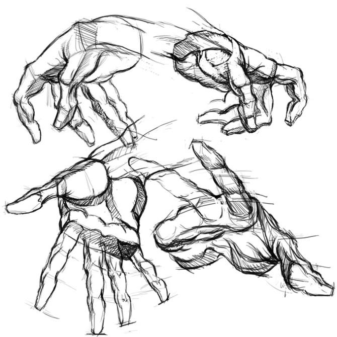 伯里曼肌肉_伯里曼或者伯恩霍加斯的人体结构绘画教学的教材里非常多,我记得网上