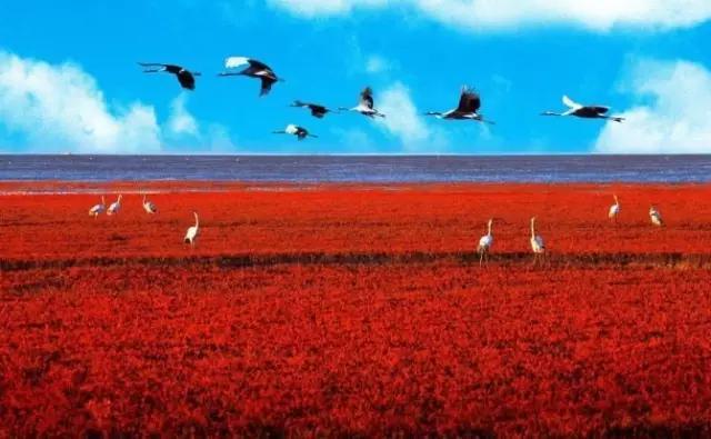 红海滩门票和廊票有什么区别_十月一在辽宁省内都有什么好玩的地方旅游地方_百度知道