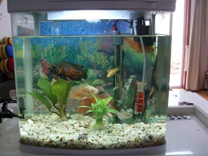 鱼缸如何养冷水鱼_我的水族箱养鱼 有图片_百度知道