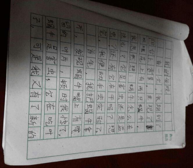 >>初中作文>>植物觀察日記300字文章小學生觀察內容語文分天數寫植物的倒敘日記記敘文圖片