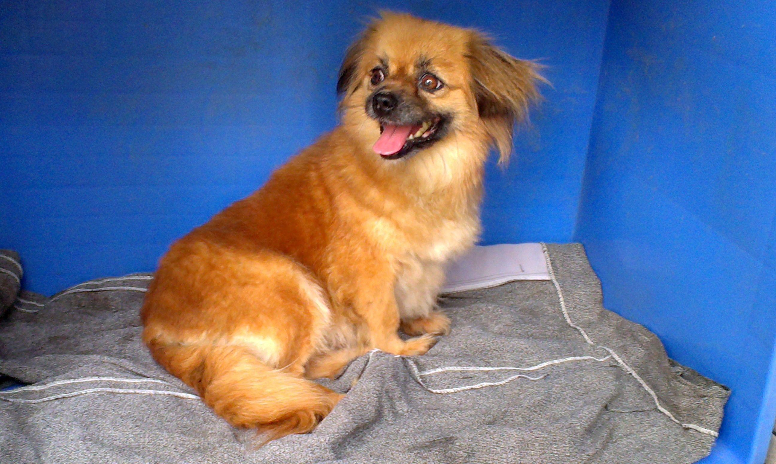 369宠物网_宠物狗的品种及图片-小型狗狗图片品种价格_狗的种类大全和图片