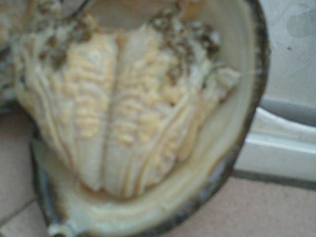 河蚌怎么清洗才干凈?怎么做湯才好?圖片
