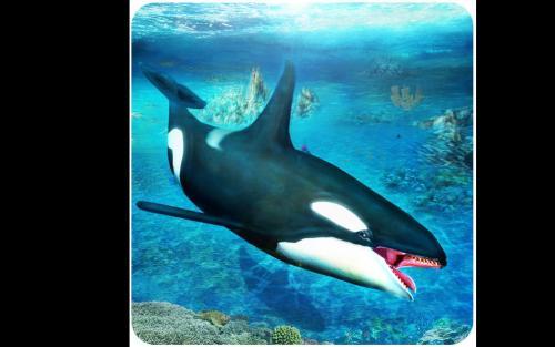 梦见鲨鱼吃人_鲨鱼为什么吃人-鲨鱼到底吃不吃人_鲨鱼会越过防鲨网吗_中国 ...