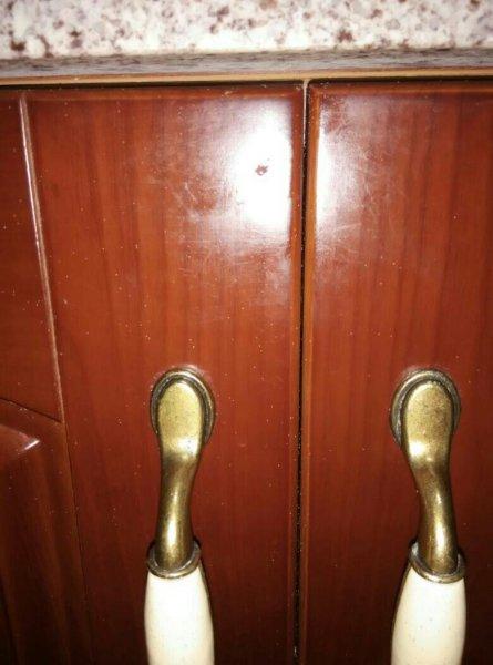 家里廚房柜子上有很多白色小蟲子 是什么怎么處理?圖片