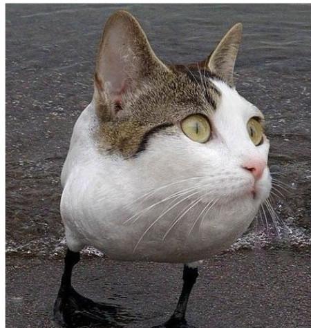 日本田园猫_分类:宠物 分享到:  2012-01-05 01:49  提问者采纳 中华田园猫,我家