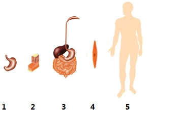 欧美最大胆裸体囹�a_对右边人体结构层次示意图的叙述中,错误的是( )a.体.