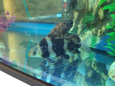 清理鱼缸的鱼种类_卖鱼的说是冷水清道夫