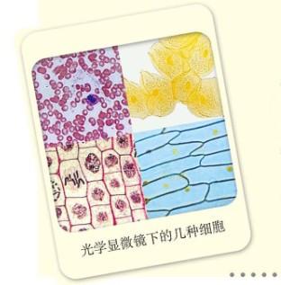 草裙礹c.�N:/��aiy�n:�_问下列都是什么细胞?